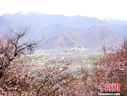 """西藏有座""""巨石上的宫殿"""" 如今被桃花包围了"""