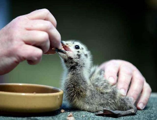 伊斯兰的动物福利观_-造化-福安-人类