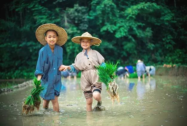 深山里的女僧人 种出全国最好的米 月销超百万_田间-还可以-也在-道场-江西
